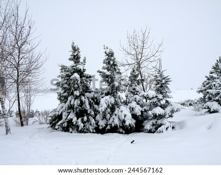 Beautiful white winter