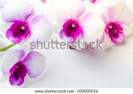 Beautiful white with pink orchid on white wooden background