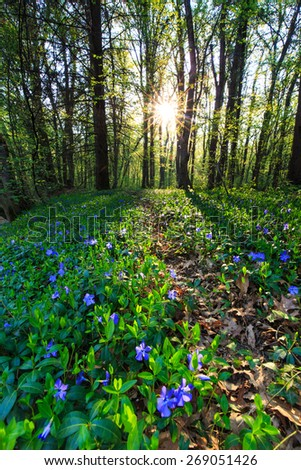Beautiful wild flowers in the forest, under warm evening light - stock photo