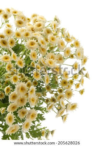 Beautiful wild flowers isolated on white