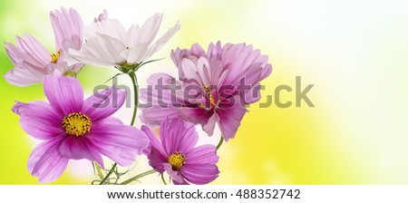 Beautiful wild flowers on abstract   background