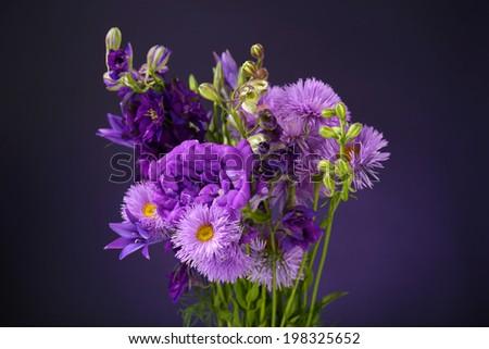 Beautiful wild flowers on dark blue background - stock photo
