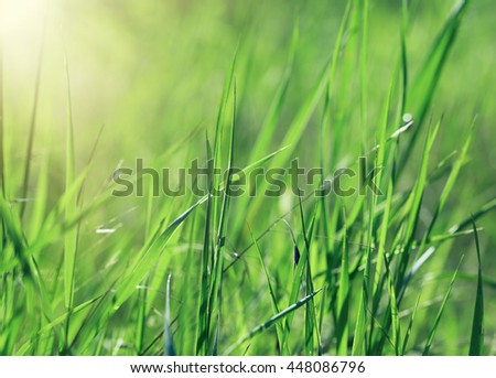 Beautiful wild green grass in shiny summer day