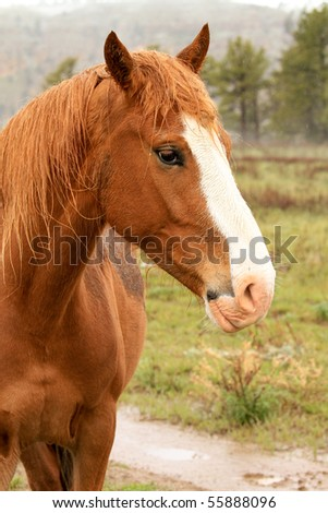 Beautiful wild horse in the American west, with fresh snow falling gently - stock photo