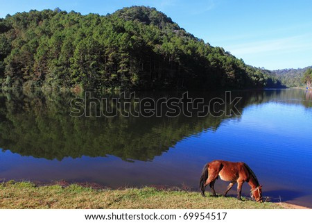 Beautiful wild horse on field near the reservoir - stock photo