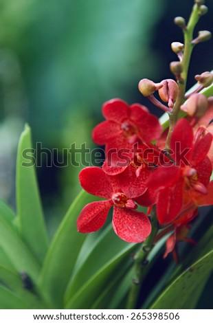 Beautiful wild orchids. selective focus - stock photo