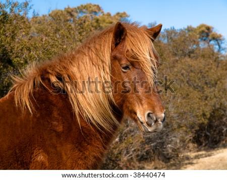 beautiful wild pony head - stock photo