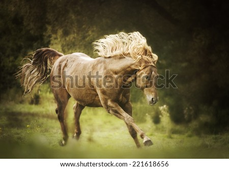 beautiful wild quarter horse stallion prancing roll and running in autumn nature - stock photo