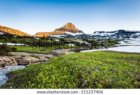 beautiful wildflower field at Logan Pass, Glacier National Park, MT - stock photo