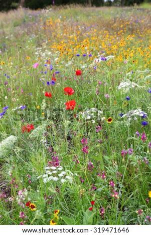 beautiful wildflowers in a field in united kingdom - stock photo