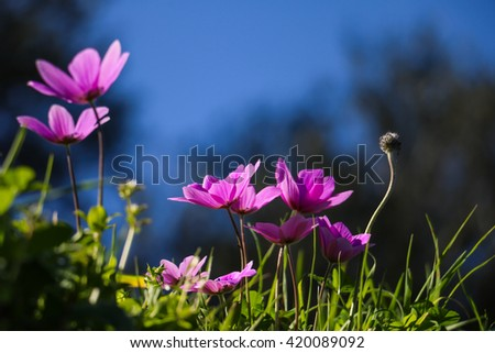 Beautiful wildflowers in sunlight in green grass against of blue sky