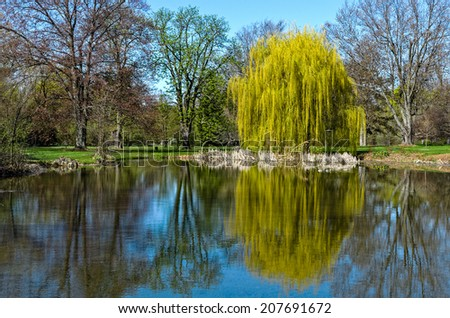 Beautiful Willow Reflection in Water - stock photo
