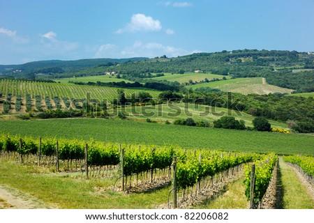 Beautiful wine fields in Italy - stock photo