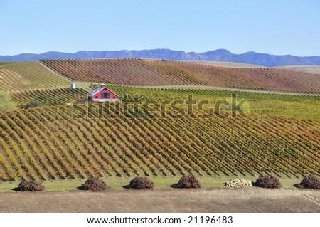 Beautiful Winery  in a Vineyard - stock photo