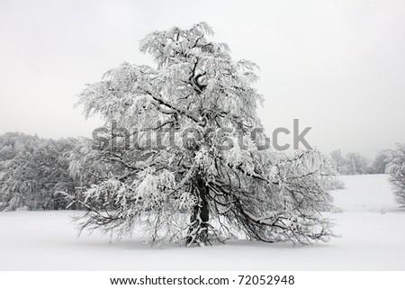 Beautiful winter - stock photo