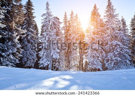 beautiful winter background - stock photo
