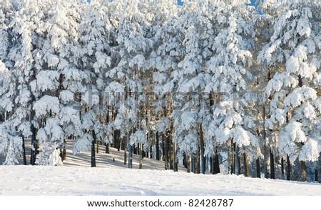 beautiful winter forest - stock photo