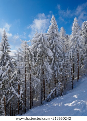 Beautiful winter forest, which I photographed in the mountains - stock photo