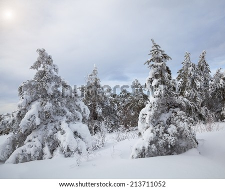 Beautiful winter forest, which I photographed in the mountains