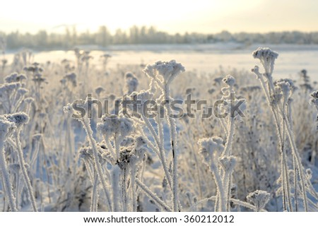 beautiful winter grass