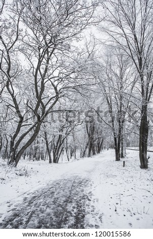 beautiful winter in the evening park in the city - stock photo