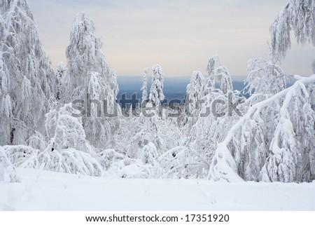 Beautiful winter landscape - stock photo