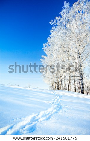 beautiful  winter landscape a with the blue sky, a  footpath  and the forest - stock photo