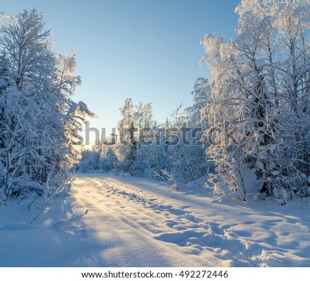 Beautiful winter landscape. Forest covered with snow and hoarfrost on a sunny day. Apatity, Kola Peninsula, Russia.