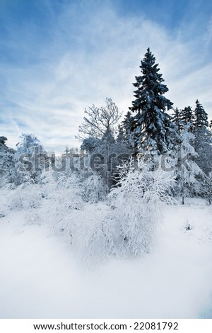 beautiful winter landscape in the ardennes, belgium