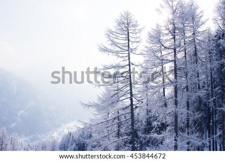 Beautiful winter landscape with fir forest in mountains