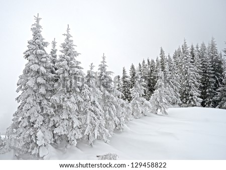 Beautiful winter landscape with fog in the Carpathian mountains, Ukraine