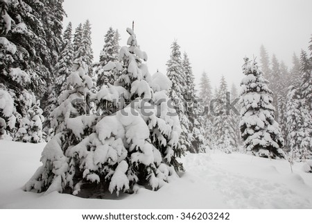 Beautiful winter landscape with snow covered trees in fog