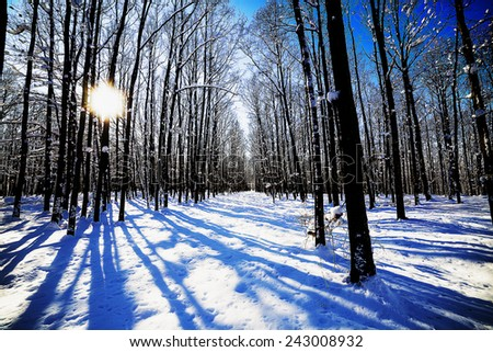 Beautiful winter landscape with snow covering the trees in a sunny day - stock photo