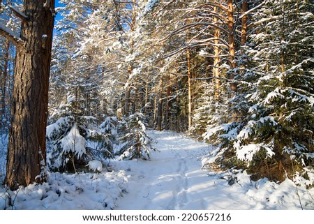 beautiful winter landscape with the forest and a footpath - stock photo