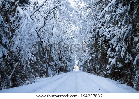 beautiful winter landscape with the forest and the road - stock photo
