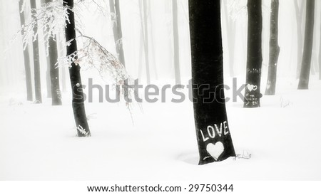 beautiful winter mood,heart and love written on a tree