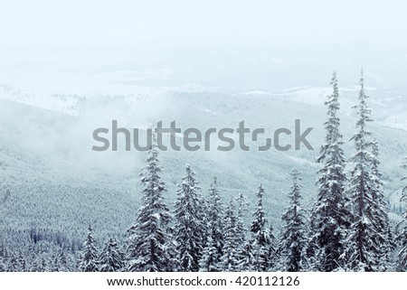 Beautiful winter mountains landscape with snow covered trees and fog above - stock photo