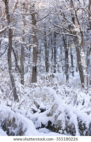 Beautiful winter nature scene in the snowed woods and trees - stock photo
