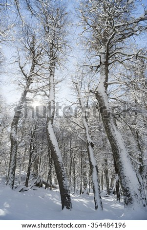 Beautiful winter nature scene in the woods with blue sky and sunshine - stock photo