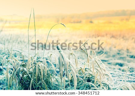 Beautiful winter nature with grass covered with snow and frost
