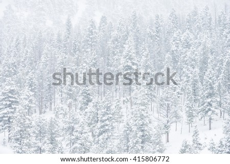 Beautiful winter scene landscape background with snow covered green trees in a wild park setting - stock photo