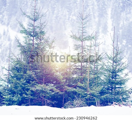 beautiful winter  scenery - stock photo