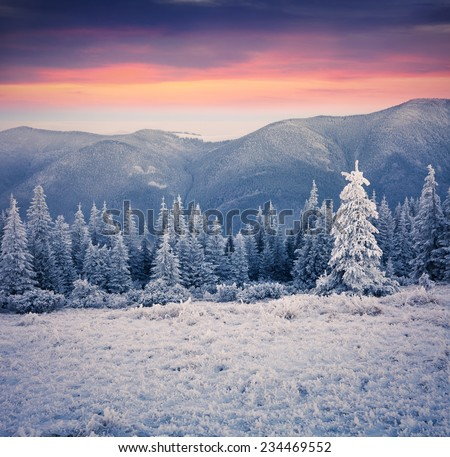 Beautiful winter sunrise in the mountain forest. First frost in december. - stock photo