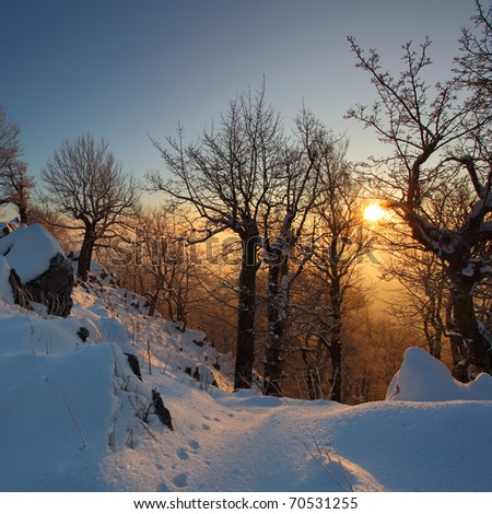 Beautiful winter sunset with trees in the snow - stock photo