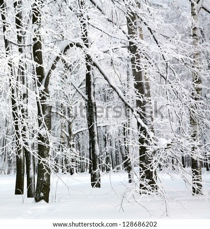 Beautiful winter trees covered snow