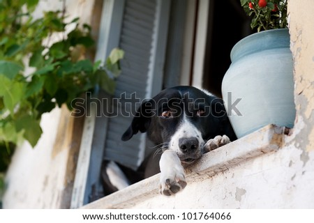 beautiful  with sweet beautiful expression dog sitting on the sill of a window