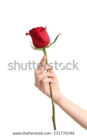 Beautiful woman hand holding a red rose and showing her manicure on a white isolated background