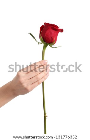 Beautiful woman hand holding a red rose bud on a white isolated background - stock photo