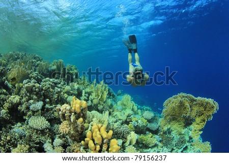 Beautiful woman in Bikini snorkels over coral reef in the Sea - stock photo