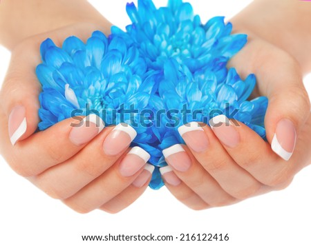 Beautiful woman's hand with perfect french manicure holding blue chrysanthemum flower - stock photo